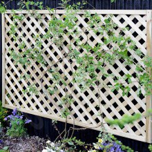 Elite Square Lattice Trellis