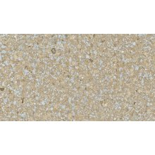 Marshall Perfecta Paving Slab 600x600x50mm Natural